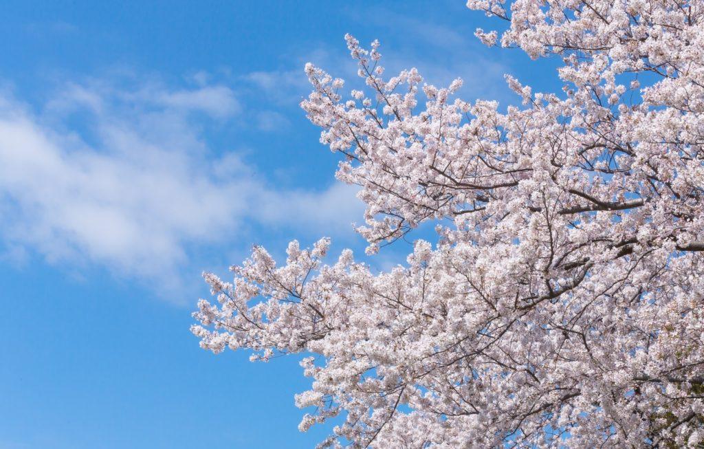 春期実力判定テストをおこないます!